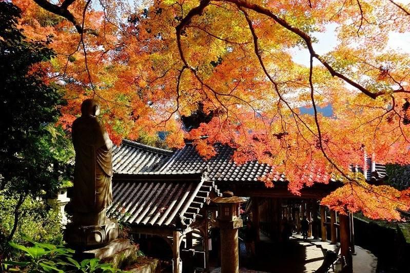 Tradisi Musim Gugur Di Jepang L Kursus Bahasa Jepang